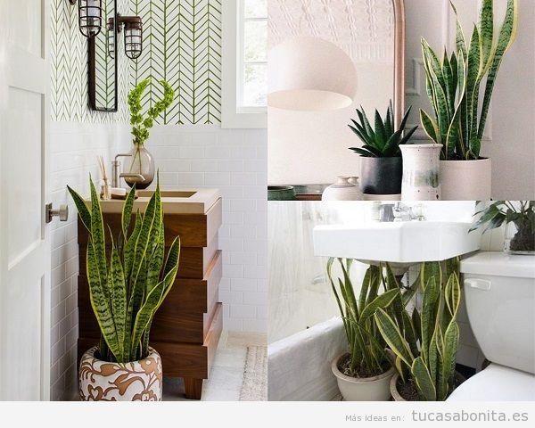 Plantas De Bano