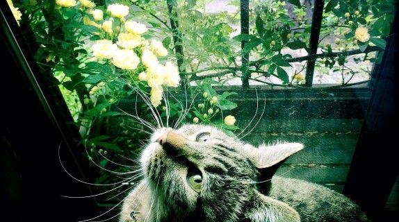 I lavori di settembre: in casa, nel gardino, nell'orto! #gardening #giardino #care #Fito #cat #September  #Autumn #autunno #seeding  #tips #garden #giardino #consigli #howto #orto #calendario #calendar #calendariodeilavori #gardencalendar #orto