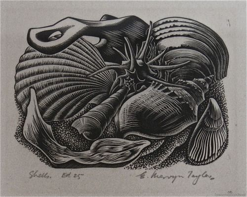E. Mervyn Taylor, Shells