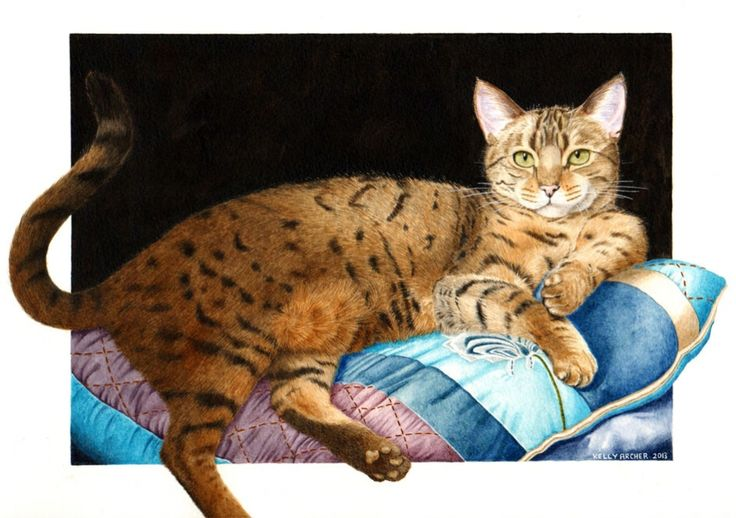Wildlife and pet portraits in watercolour at Kelly Archer Pet Portraits  #bengalcat #bengal #watercolour #watercolor #petportraits #petportrait #cat #painting