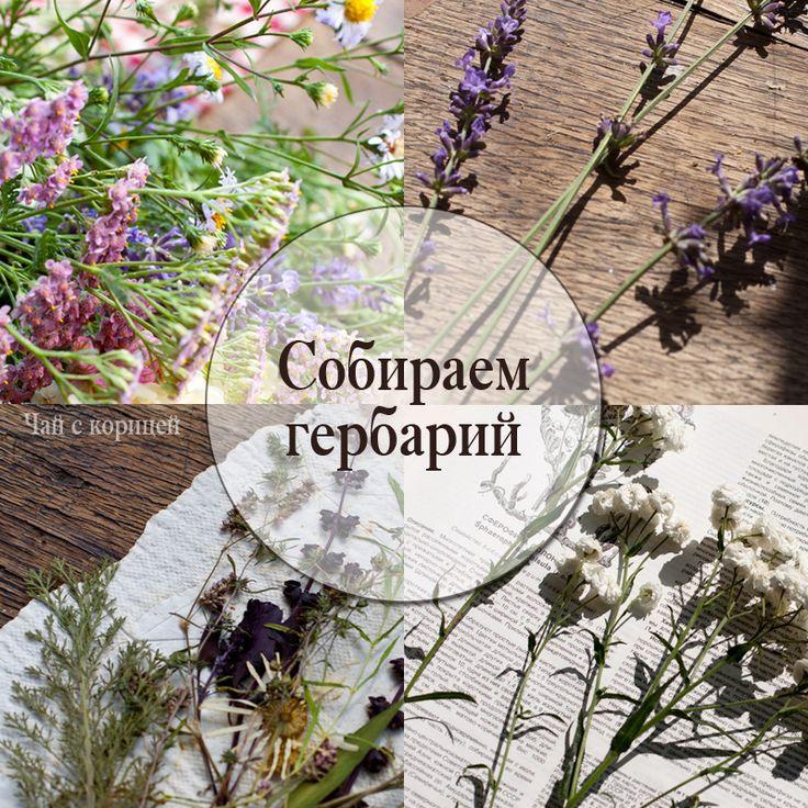 Собираем гербарий и используем в скрапбукинге