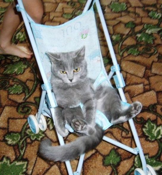 Funny images of cats