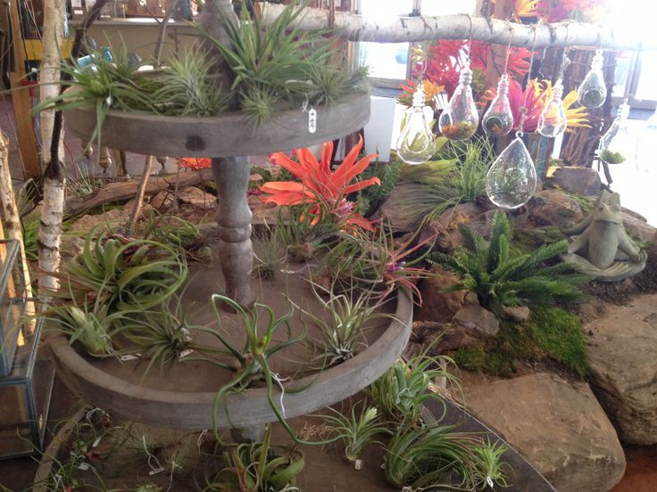 7 Best Air Plants Images On Pinterest Air Plants Blown Glass And Dinner Table Decorations