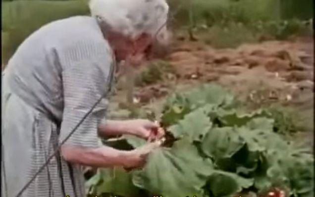 Deep Mulch Gardening , 15 Best Ruth Stout Images On Pinterest