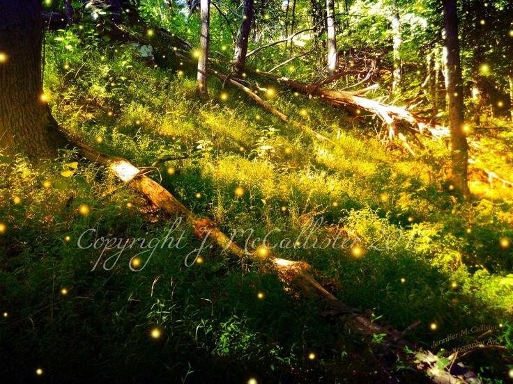 Original Photography Instant Digital Download Fireflies Glow Bugs Printable Wall Decor Nursery Decor Background Wallpaper for PC Phone Pad (5.00 USD) by GlowBugGallery