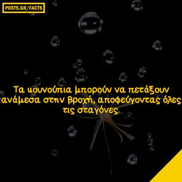 Τα κουνούπια μπορούν να πετάξουν ανάμεσα στην βροχή, αποφεύγοντας όλες τις σταγόνες.