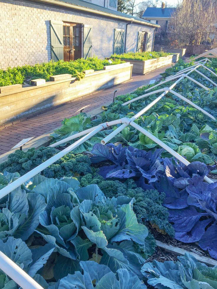year round gardening here a winter kitchen garden with raised beds lined with clay