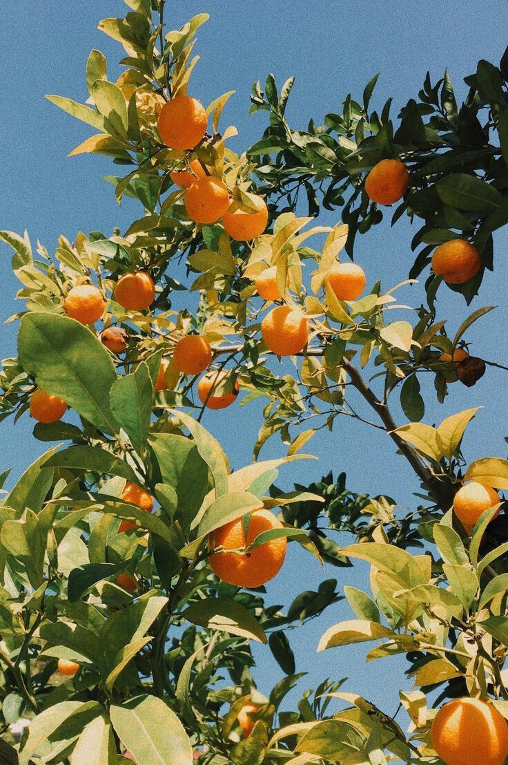 citrus trees are so naturally inspiring Color Palettes