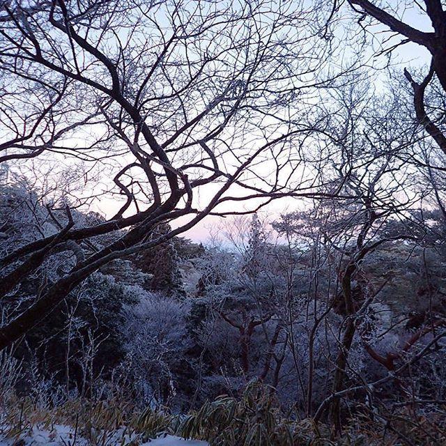 【kakkie13】さんのInstagramをピンしています。 《昨日の雪は何処へ? -7℃の山頂、付近には「氷に近い雪」はあるけど中腹より下はもう春の様な今日の摩耶山。明日七曲滝の氷瀑は見れるかな?😶 #日の出前 #朝日 #空  #六甲山 #摩耶山 #山頂  #六甲山から繋がり #日々 #景色 #自然 #木 #緑 #森林  #トレイルランニング  #ig_nature #ig_myshot #ig_daily  #instadaily #instagood  #picture #view #mountain #sky  #mountains #outdoor #trekking  #trailrunning #mountainrunning》