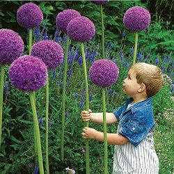 Make an Alice in Wonderland Garden With These 13 Weird Plants. Number 10's Flower is Bigger Than a Person's Head! - Garden With Creativity