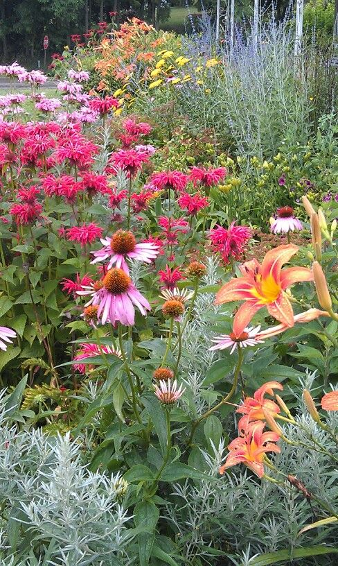 105 best images about garden zone 6 perennials on for Garden designs for zone 6