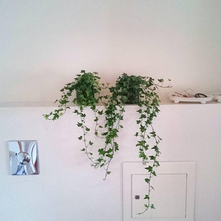 Kjøpte eføy i går for å pynte opp badet. Å dekorativ det er den #eføy #dekor #dekorere #pynte #bad #baderom #bathroom #planter #plants #interior #interiør #baderomsinspo #inspirasjon #inspiration #hjem #home