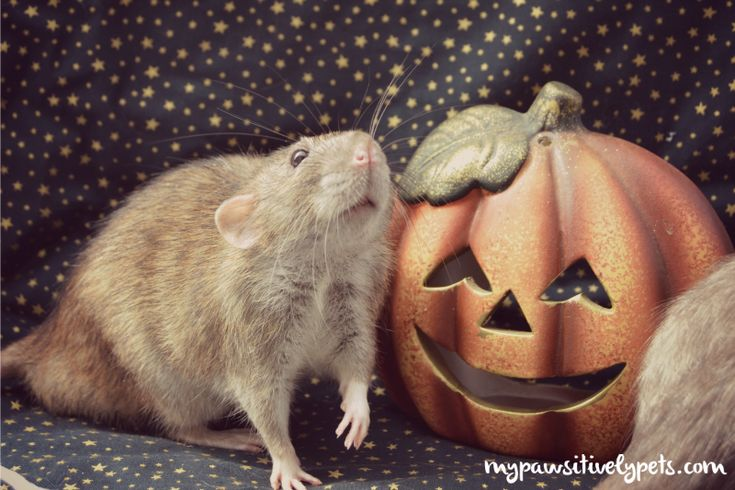 Have a Super Cute Halloween! | Pawsitively Pets