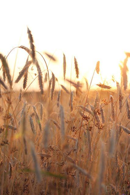 Rain liebt die Wiesen und Felder. Sie braucht die Freiheit. Doch wird diese immer mehr eingeschränkt als die Candor die Macht mithilfe der Ferox an sich reißen und alle unterdrücken wollen.