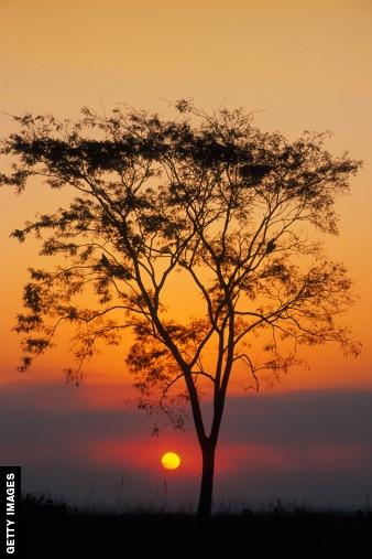 Tree #PotentialistCanada