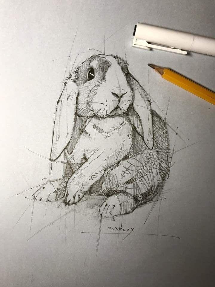 40 Free & Straightforward Animal Sketch Drawing Data & Concepts