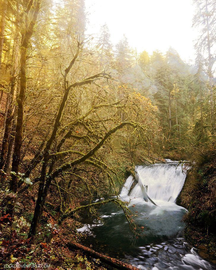 Your Essential Guide to Hiking Trail of Ten Falls Silver Falls State Park Oregon - So many waterfalls in one hike! // Local Adventurer #traveloregon #oregon #hiking #hikes