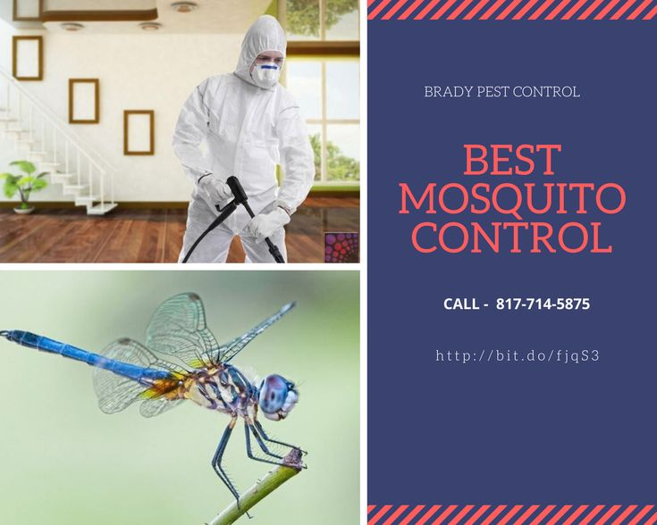 How to Get Rid Of Mosquitoes Cedar Hill TX   Best mosquito ...