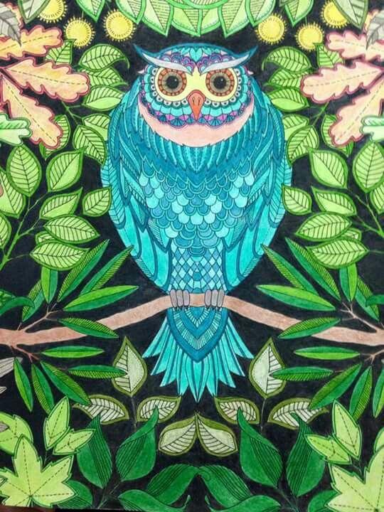 Owl Secret Garden Coruja Jardim Secreto Johanna Basford BasfordColouringColoring BooksCute