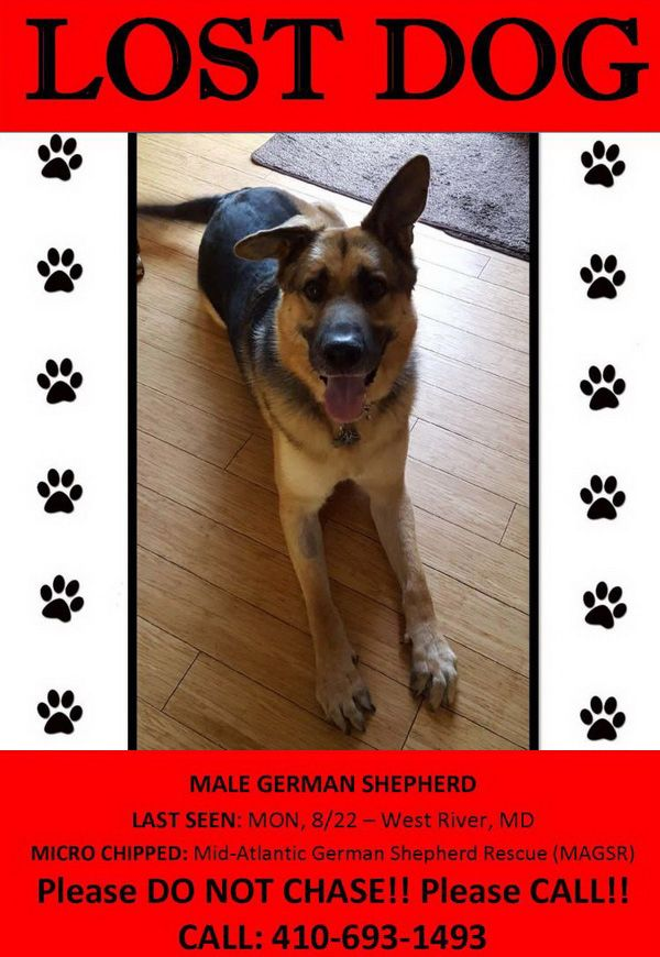 Magsr Org Providing Rescue And Adoption Services In Md Dc Belgian Shepherd Puppies For Sale Ado In 2020 Puppies For Sale Shepherd Puppies Cute German Shepherd Puppies