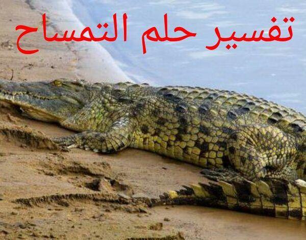 تفسير حلم التمساح Crocodile Animals Interpretation
