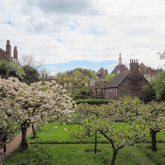 FentonHouse, Hampstead, London, England. Appletree garden, National Trust フェントンハウス #ハムステッド #ロンドン #イギリス #りんごの木 #庭 #ナショナルトラスト