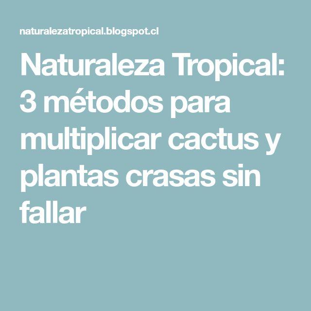 Naturaleza Tropical: 3 métodos para multiplicar cactus y plantas crasas sin fallar