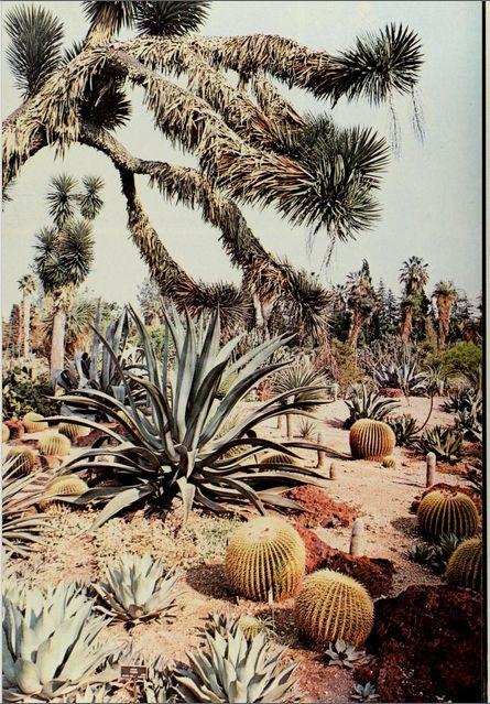California, a picture book, 1978.