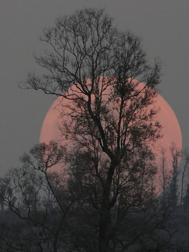Now this is what a super moon should have looked like