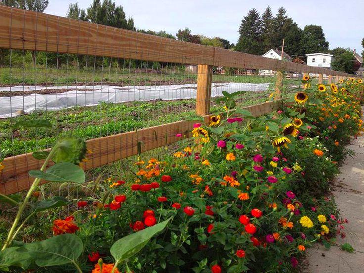 flowers around the chicken fence