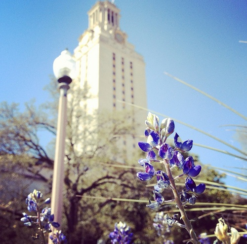 It's bluebonnet season on the Forty Acres! Photo by StellaTex.