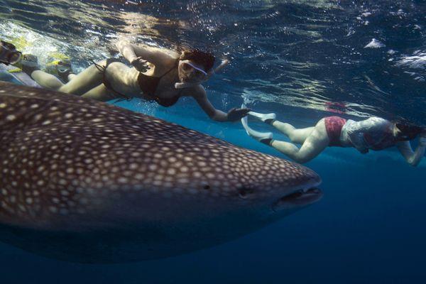 #CAsWildlife | El Niño brings rare fish to US West Coast