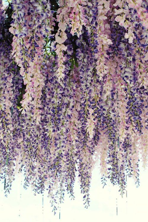 Image Via: Etymologie: Ideas, Inspiration, Hanging Flowers, Purple Flowers, Wisteria, Lavender Wedding, Beautiful Flowers, Floral, Wedding Colors Palettes