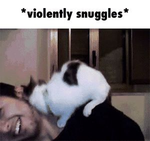So much snuggles GIF