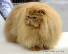 I'm not fat, I'm just fluffy.