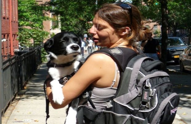 how to create a successful dog walking business