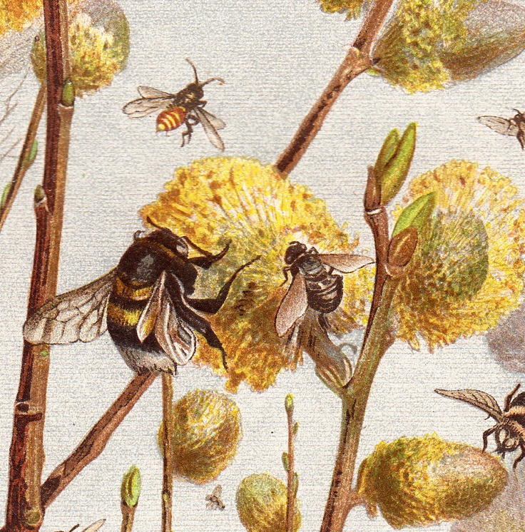 него закончились картинки для декупажа мед и пчелы шаровидная аскомицет-сапрофит
