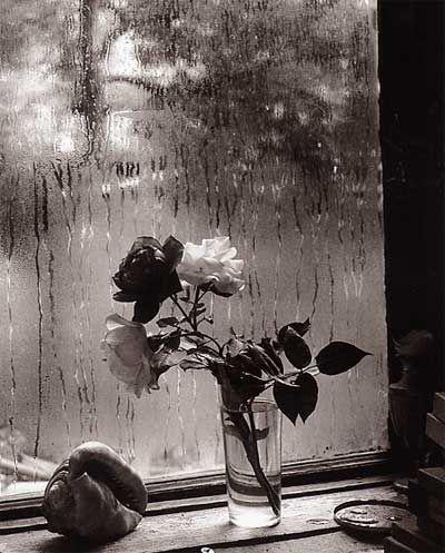 The Last Rose of Summer by Josef Sudek