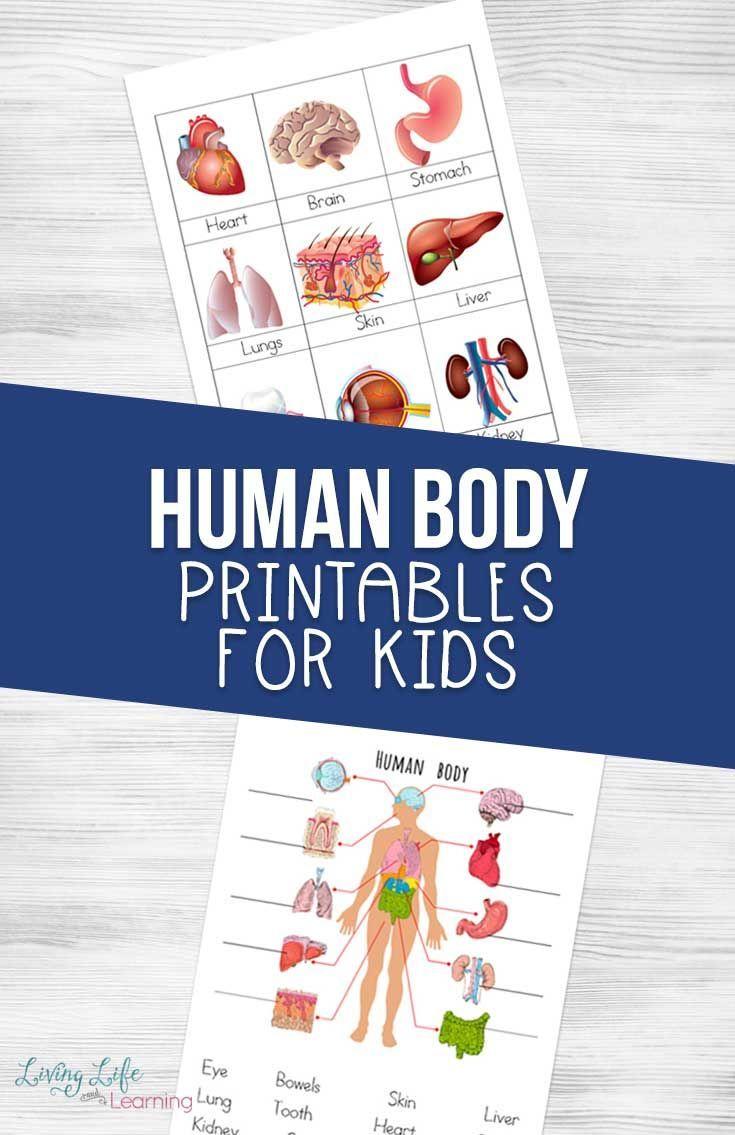 Human Body Printables For Kids Human Body Printables Human Body Activities Kindergarten Science Activities [ 1135 x 735 Pixel ]