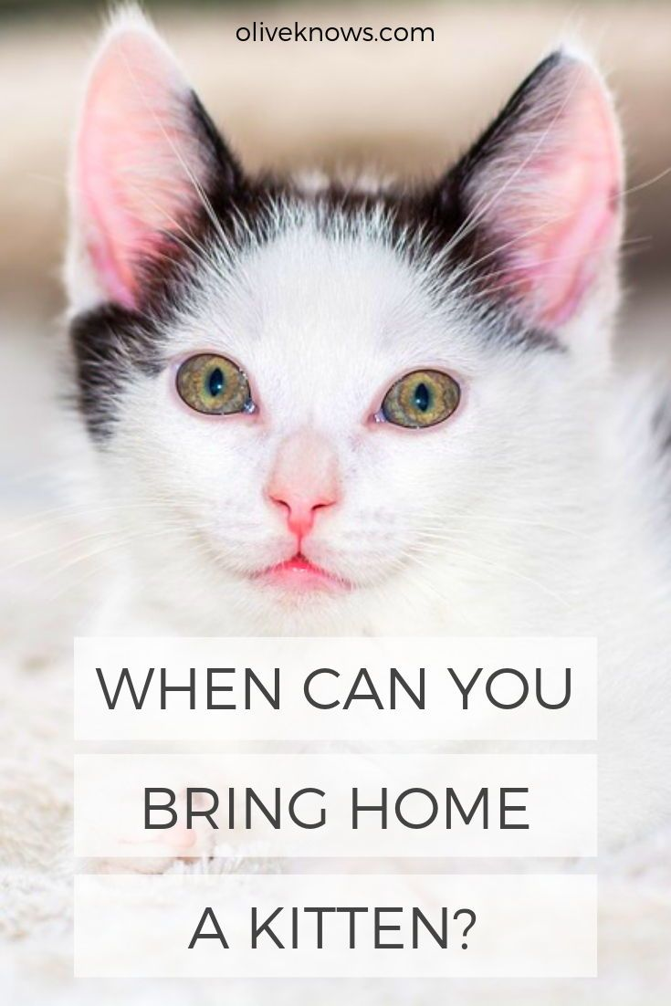 Bringing Home A New Kitten Requires The Patience And Cooperation Of Everybody In Your Home To Ensure That Your Young F Cat Care Cat Safety Low Maintenance Pets