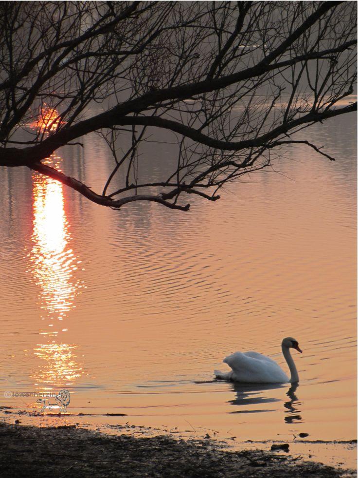 #Sonnenuntergang # Naturschutzgebiet #germany