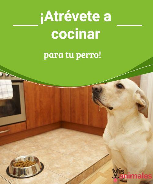 ¡Atrévete a cocinar para tu perro!  Cocinar para tu perro es más fácil de lo que crees. Aquí te dejamos unas recetas sencillas y baratas que a tu perro le encantarán. #recetas #alimentación #cocina #atreverse