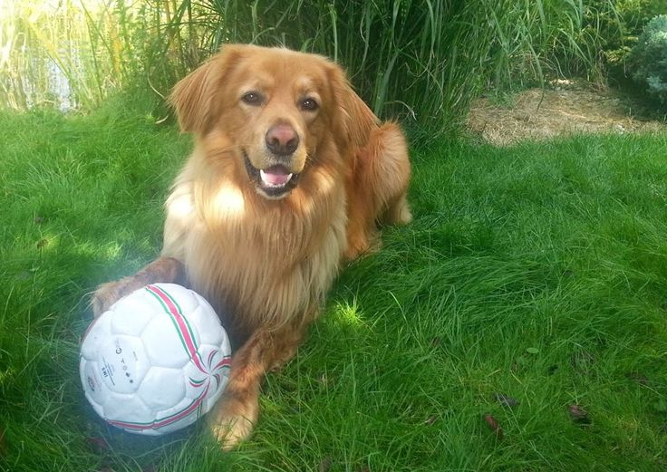Sunny and HIS ball. Don´t touch it! :-)