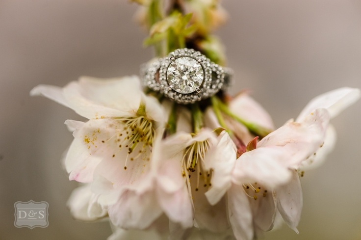 Cherry blossoms and wedding ring