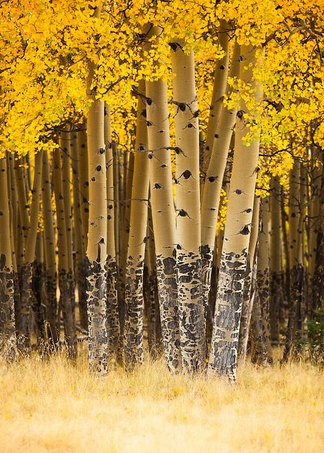 Carson National Forest, New Mexico