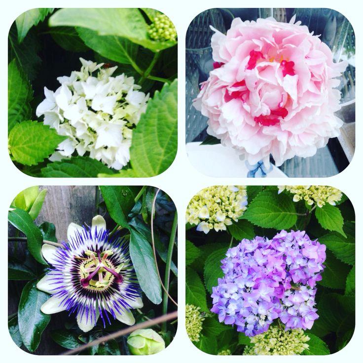 Kleuren uit eigen tuin - colors from my own garden