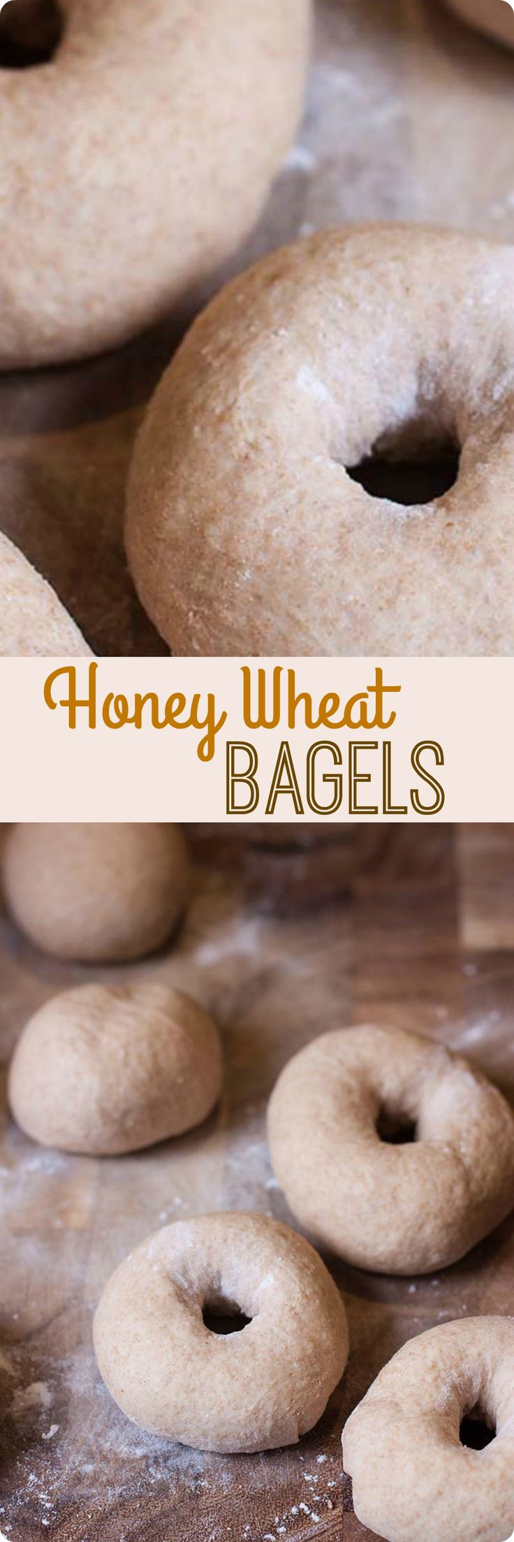 Honey Wheat Bagels | No need to stop at the local bagel shop! These honey wheat bagels are easy to make at home. Mix in chocolate chips or raisins to recreate your favorite flavors. Find recipe at redstaryeast.com.