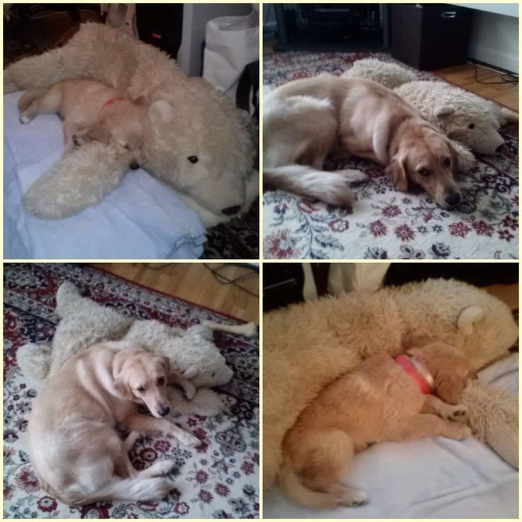 Best Dogs They Grow Up Images On Pinterest Recreate Photos - 26 dogs puppyhood photos