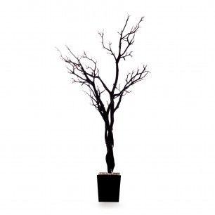 Manzanita Tree In Pot - Black. For a wedding centerpiece