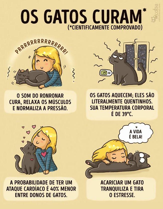 20 comics que mostram como sua vida muda se você tem gato